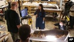 Džej Pi Braun, konzervator u Fild muzeju sa svojim timom proučava mumificirano telo Minirdisa, 14-godišnjeg egipatskog dečaka, sina sveštenika.