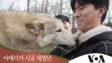 [아메리카 시골 체험단] 전설의 '늑대개'를 만나다