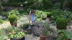 Ботанічний сад, що об'єднує світ у столиці США. Відео