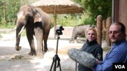 Ilmuwan Angela Stoeger dan Daniel Mietchen merekam vokalisasi gajah bernama Koshik di Kebun Binatang Everland, Korea Selatan. (Foto: Current Biology, Stoeger et al.)