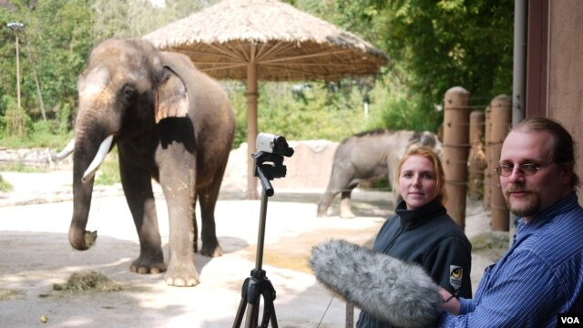 Angela Stoeger and Daniel Mietchen record Koshik's vocalizations at the Everland Zoo in South Korea. (Credit: Current Biology, Stoeger et al.)