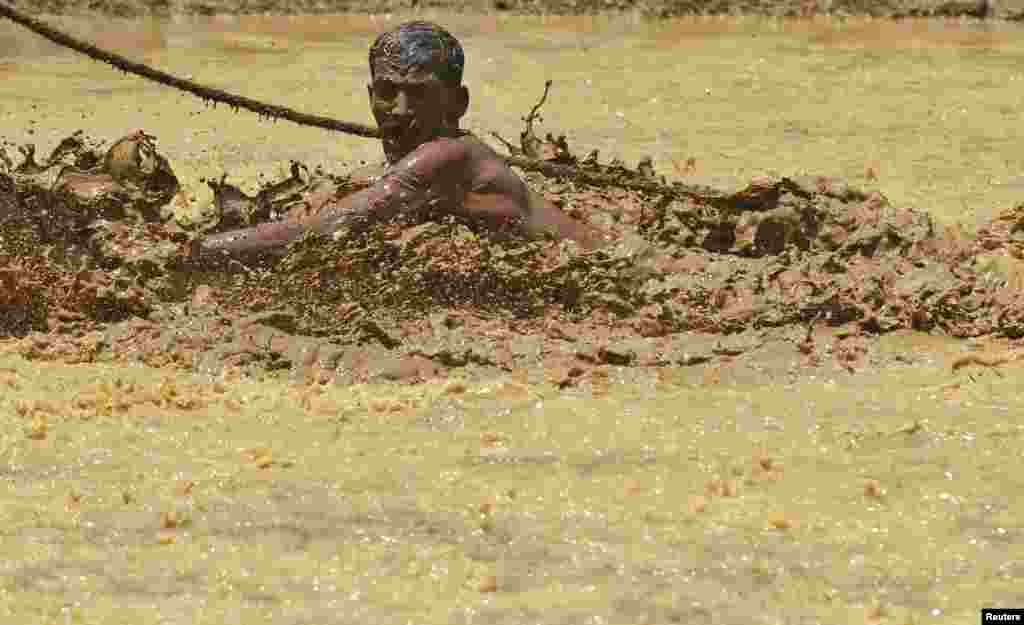 A farmer falls as he tries to hold the rope of a pair of oxen as they race through a paddy field during the Kakkoor Kalavayal festival at Kakkoor village in the southern Indian state of Kerala.