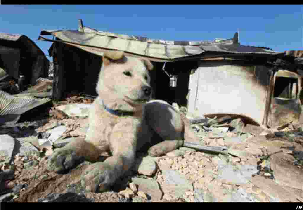 A dog sits at a house destroyed by North Korean shelling on Yeonpyeong island, South Korea, Friday, Nov. 26, 2010. North Korea warned Friday that U.S.-South Korean plans for military maneuvers put the peninsula on the brink of war, and appeared to launch