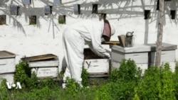 Une application pour surveiller les abeilles
