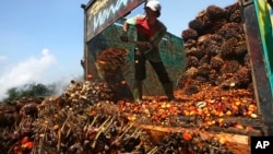 Seorang pekerja menurunkan kelapa sawit di pabrik minyak kelapa sawit di Lebak, Indonesia (foto: ilustrasi).