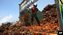 Seorang pekerja menurunkan buah kelapa sawit di pabrik pengolahan kelapa sawit di Lebak, Indonesia, 19 Juni 2012. (Foto: Dok/AP)