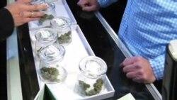 خرید و فروش و مصرف ماریجوانا در کلرادو