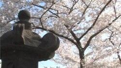 Cherry Blossom Festival Marks Centennial Event