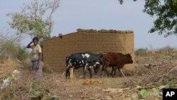 Huíla: Pastores e fazendeiros em rota de colisão