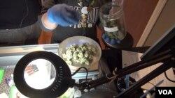 Prodaja marihuane u Koloradu