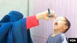آرشیف: یو ماشوم په ننګرهار ولایت کې د پولیو ضد واکسین څاڅکي ترلاسه کوي