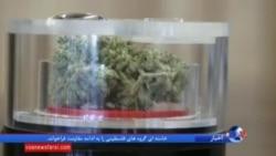 مصرف پزشکی ماریجوانا در ۲۸ ایالت آزاد؛ از نظر دولت فدرال غیرقانونی