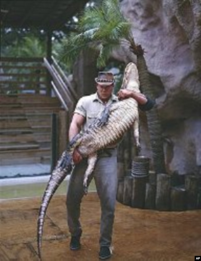 It takes a muscular man like this fellow to subdue and hold up a very unhappy alligator. (Carol M. Highsmith)