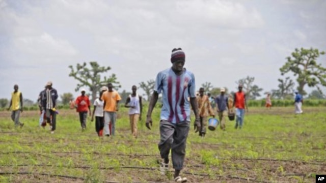 Senegalese farmers (File Photo).