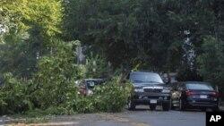 华盛顿地区倒下的大树横卧街头
