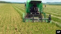 Exploração agrícola em Malanje (foto de arquivo VOA / Isaias Soares)