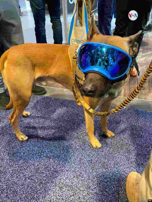 Un perro con un visor Hitech, la tecnología al servicio de los animales. Iacopo D Luzi/VOA.