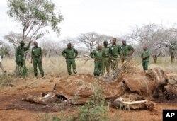 FILE - Kenyan Wildlife Rangers are seen standing near the carcass of an elephant in Tsavo East, Kenya, June 19, 2014.
