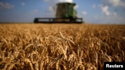 A combine drives through a field of soft red winter wheat during the harvest on a farm in Dixon, Illinois, July 16, 2013.