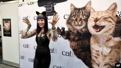 Unduh 61+  Gambar Kucing Terbesar Di Dunia Paling Keren Gratis