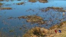 从食物链源头着手治理藻类