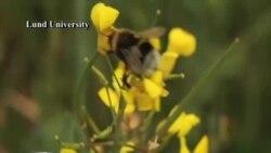 Исчезнување на пчелите