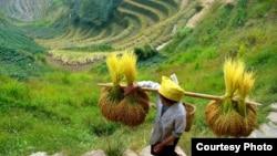 中國貴州生活的農民。
