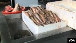 Rečna riba kečiga, primerci manji od 40 centimetara koje nije dozvoljeno loviti, na Zemunskoj pijaci u naselju Zemun, Beograd, Srbija, 19. decembra 2017. (Foto: Aleksandra Nenadović, Glas Amerike)