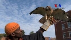 Kuşlar Çocuklara Yardım Ediyor