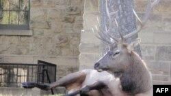 Йеллоустоун: Центральный парк культуры и отдыха США