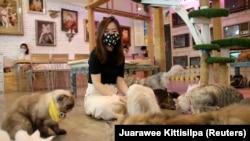 Pelanggan bermain dengan kucing di kafe Cat Caturday setelah pemerintah mulai membuka beberapa restoran di luar pusat perbelanjaan, taman dan tempat pangkas rambut, selama wabah COVID-19 di Bangkok, Thailand, 7 Mei 2020. (Foto: Reuters/Juarawee Kittisilpa
