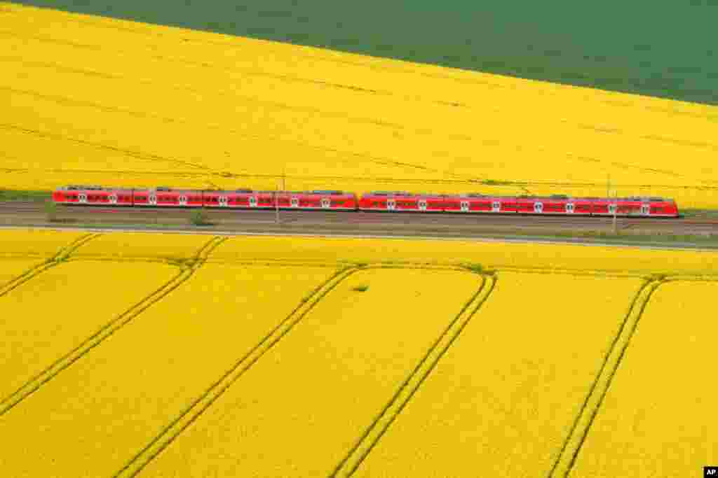 A train makes its way through rapeseed fields in Lemmie, Germany.