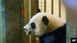 Bei Bei, bayi panda raksasa di National Zoo, Washington (Foto: dok).