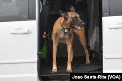 Segurança Canina