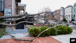A tree is blown over as the region experiences high winds, March 2, 2018 in Washington.