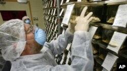Pengembangbiakan tikus percobaan dengan imunitas manusia diharapkan dapat mengarah pada pembuatan vaksin anti-AIDS (foto: Dok).