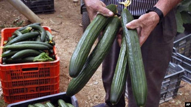A farm worker holds cucumbers in a greenhouse in Algarrobo, near Malaga, southern Spain, May 31, 2011