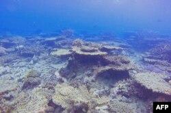 ARC Centre of Excellence Coral Reef Studies melaporkan kerusakan di Great Barrier Reef, 14 Oktober 2020. (Foto:ARC Centre of Excellence Coral Reef Studies via AFP)
