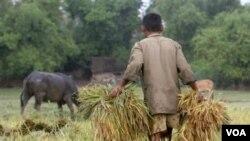Pengamanan stok pangan nasional diharapkan tetap melindungi petani dalam negeri dari gempuran beras impor.
