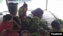 ကြမ္းရြက္မ်ား (Photo Credit: Min Can CI)