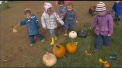 Дитячий садочок для маленьких господарів або як виховувати дітей у гармонії з природою. Відео