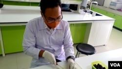 Mahasiswa Fakultas Teknobiologi Universitas Surabaya, Linus Nara Pradhana, sedang mengolah buah Jamblang (foto: Petrus Riski/VOA).
