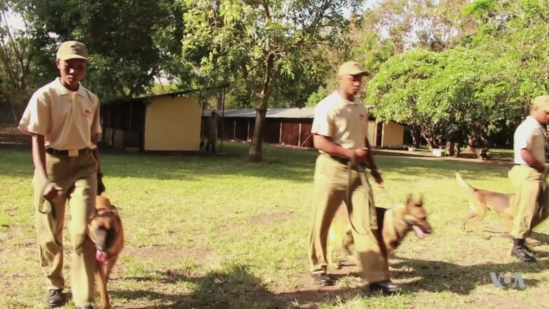 Botswana Rangers Use Trained Dogs to Crack Down on Poachers