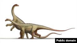 یکی از رد پاها به یک نوع خزندهپایان - موجودات عظیمالجثه با گردن و دم دراز تعلق داشت.