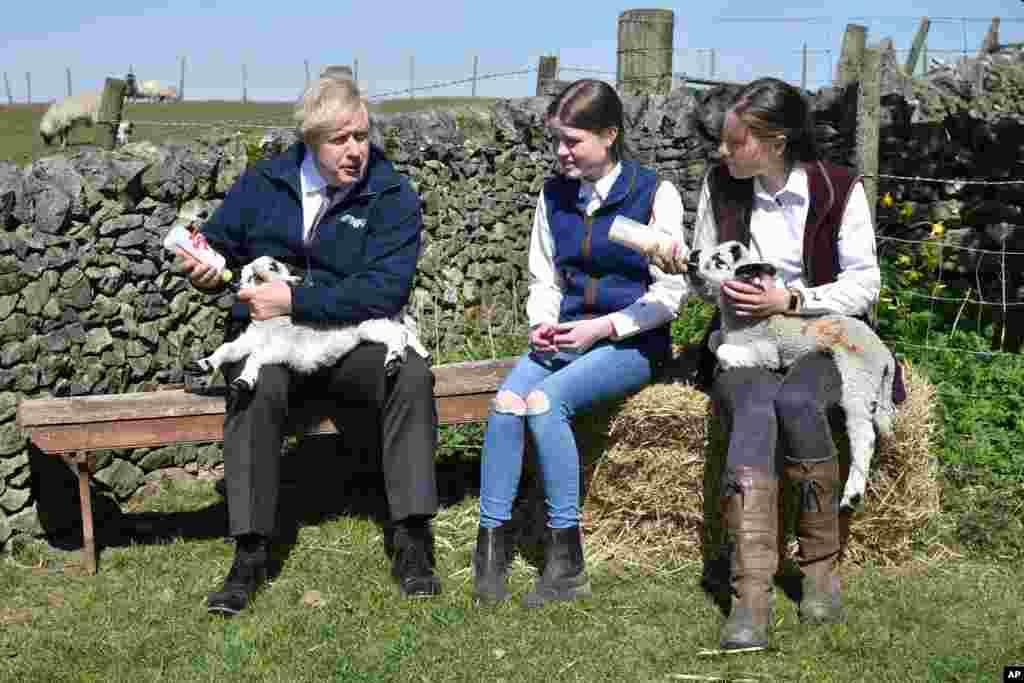 تغذیه یک بره توسط بوریس جانسون نخست وزیر بریتانیا، در یک مزرعه در استونی میدلتون، انگلیس