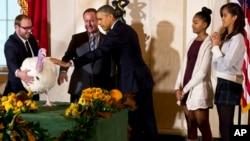 """Malia (kanan) dan Sasha Obama mendampingi ayahnya, Presiden AS Barack Obama, melakukan tradisi tahunan """"mengampuni"""" kalkun Hari Bersyukur atau Thanksgiving (26/11). (AP/Jacquelyn Martin)"""
