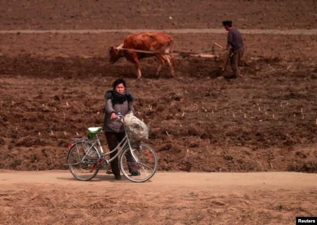 Dân chúng Bắc Triều Tiên bị thiếu hụt lương thực một cách nghiêm trọng và bị buộc phải làm việc trong những điều kiện không khác gì nô lệ.