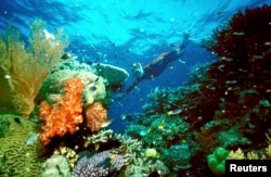 FILE - A tourist swims on the Great Barrier Reef in this undated file picture. Abrupt changes in water temperature overwhelm the natural ability of coral to survive, a new study shows.