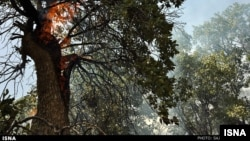 La déforestation se poursuit à travers le monde, mais son rythme a ralenti