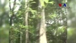 Ormanların Yokolması Önlenebilir mi?